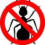 No alle formiche