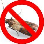 No larve alimentari