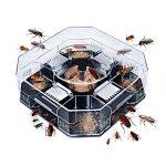 Trappola per scarafaggi