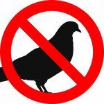Basta con i piccioni