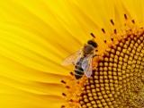 🔴 Insetticida.org aderisce alla campagna per salvare le api!