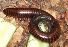 Eliminare i millepiedi: spray congelanti, insetticidi e terra diatomacea – CONSIGLI