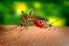 Zanzare in aumento nell'ultima estate… anche nelle ricerche web