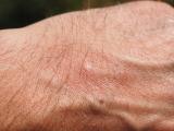 Estate, insetti in arrivo: ecco alcuni miti da sfatare sul fai-da-te