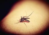 Perché le zanzare pungono soprattutto alcune persone?