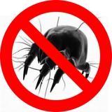 Come tenere lontani da casa gli acari della polvere | GUIDA
