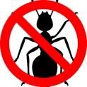 Rimedi contro le formiche in casa | GUIDA