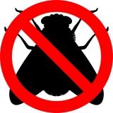 Come allontanare le mosche: trappole e consigli utili – GUIDA