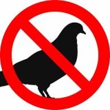 Come allontanare i piccioni: dissuasori, veleno e altri rimedi