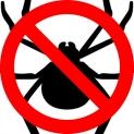 Come eliminare i ragni da casa | GUIDA