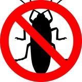 Come disinfestare casa dagli scarafaggi | GUIDA