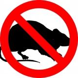 Come eliminare i topi: trappole, veleno, ultrasuoni e altri rimedi | GUIDA