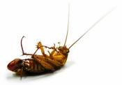Gli uomini temono le zanzare, le donne gli scarafaggi | L'INDAGINE